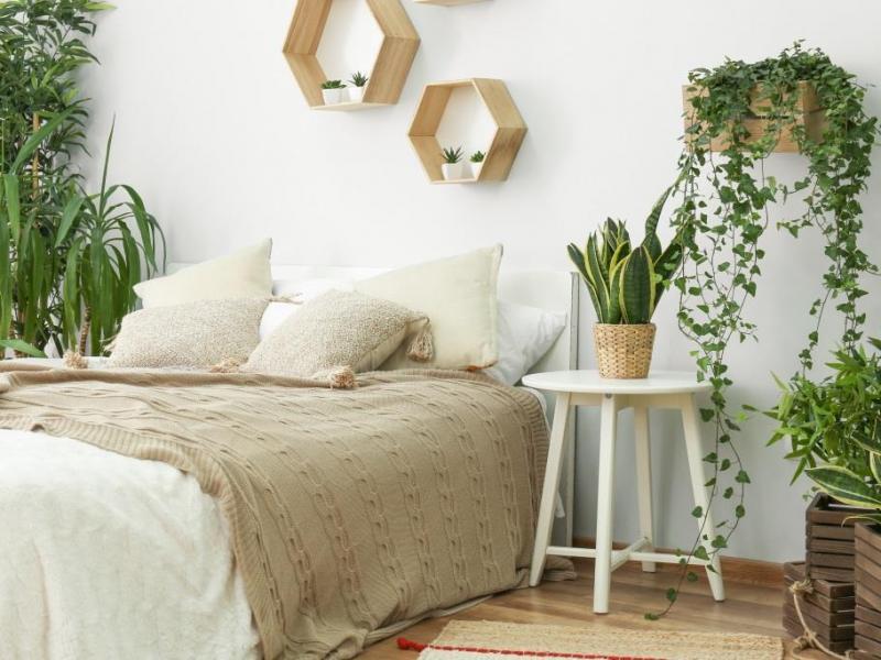 Kwiaty do sypialni - 6 roślin doniczkowych które poprawią jakość ...