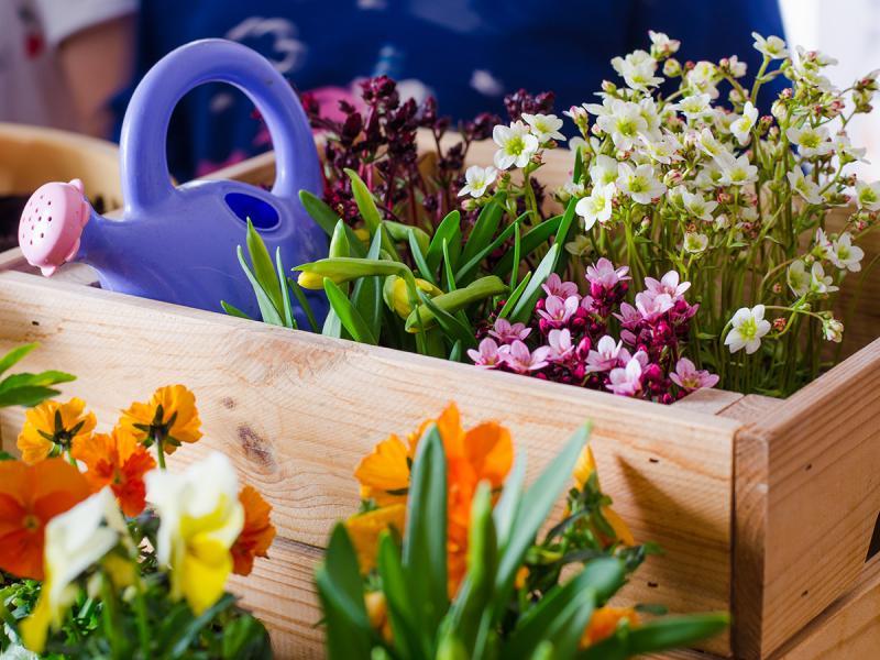 Kwiaty Na Balkon Polnocny Najpiekniejsze Gatunki Ogrod I Balkon Polki Pl
