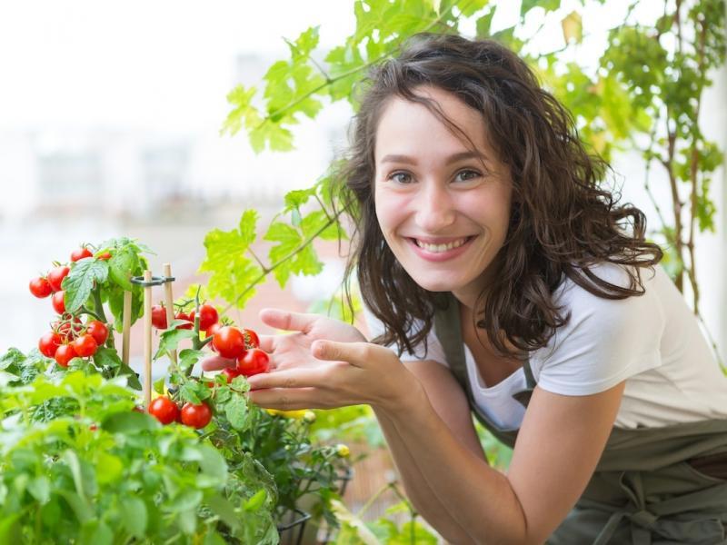 Jak Uprawiać Pomidory W Doniczce Na Balkonie Lub Tarasie