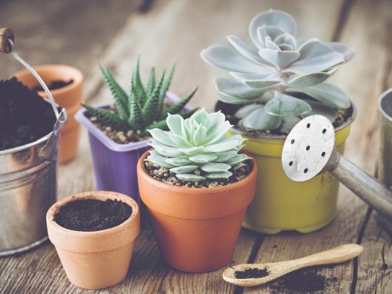 Jak Naturalnie Zadbać O Kwiaty Od Czasu Do Czasu Podlej Je