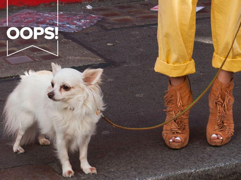 Modowy sklep internetowy sprzedaje psy, czyli najgorętszy dodatek sezonu?!