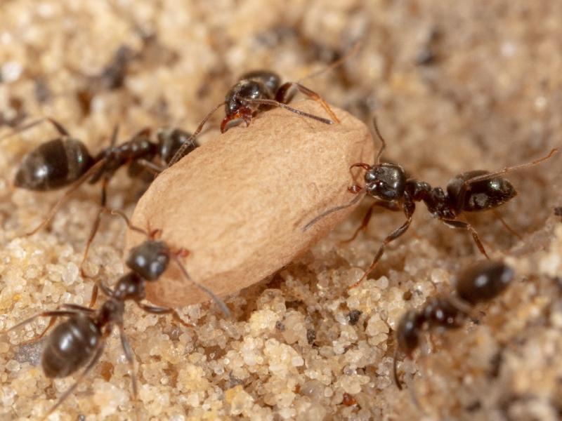 Mrówki W Domu Już Nie Będą Problemem Oto Kilka Skutecznych