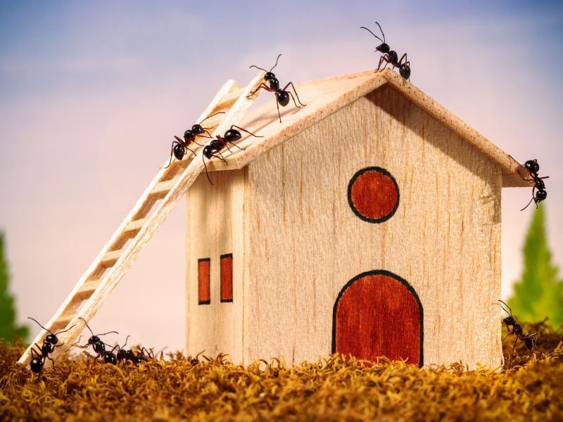 Jak Pozbyć Się Mrówek Z Domu Kompletny Poradnik Pani Domu
