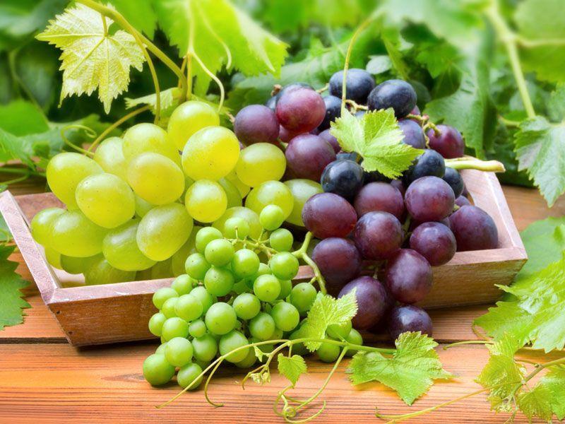 Randki winorośli