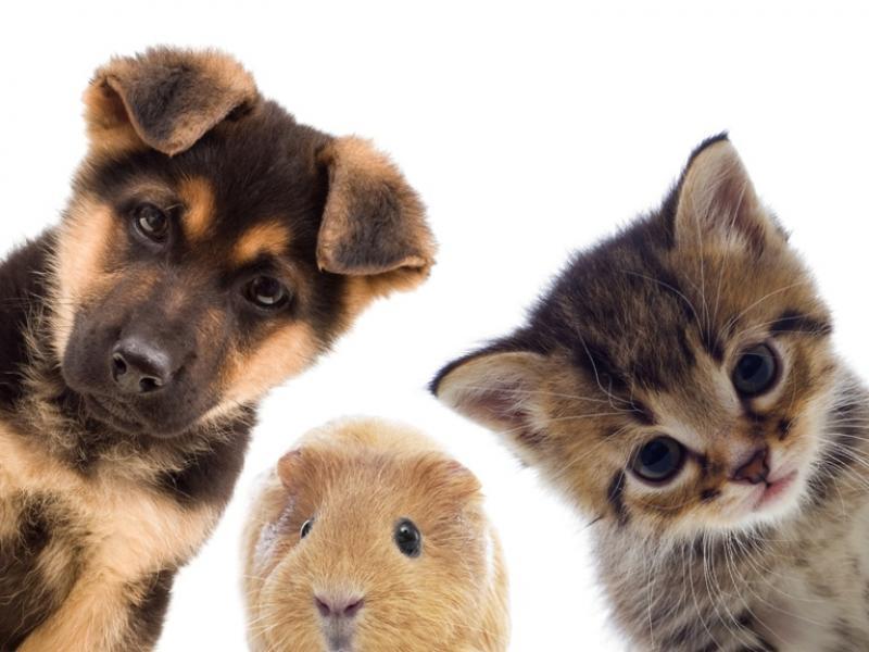 Unikalne Jakie zwierzę domowe wybrać? Zobacz, czym się kierować PY41