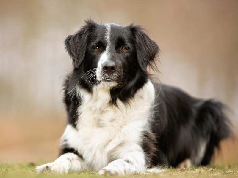 Przyjaciel dziecka i obrońca domu? Ten pies to prawdziwy skarb!