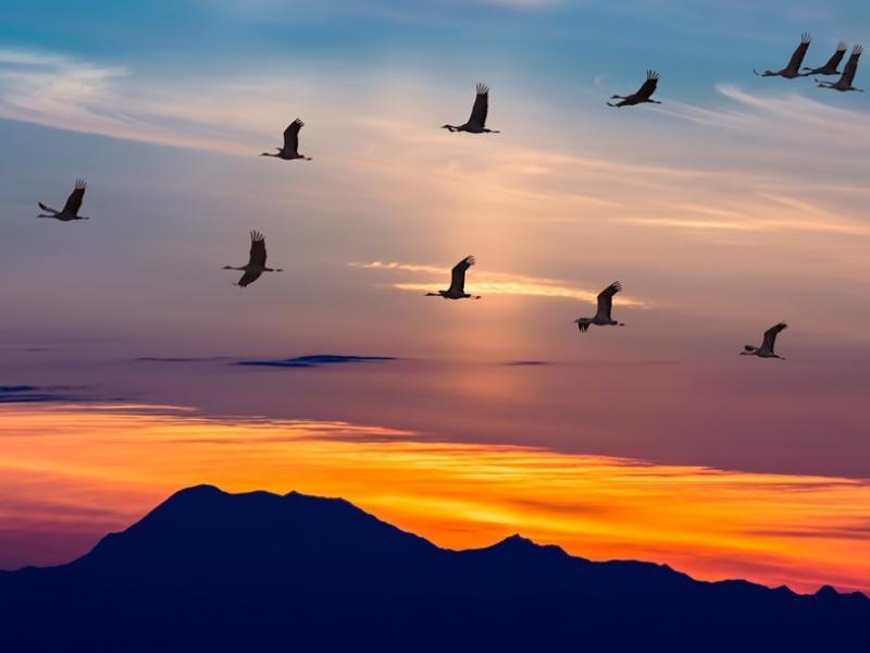Ptaki zaczęły już odlatywać do ciepłych krajów. Ta akcja przypomina, że nie wszystkim uda się wrócić!