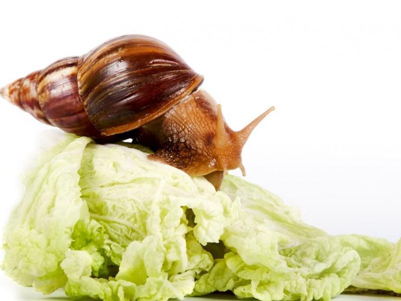 Slow food - na czym polega?