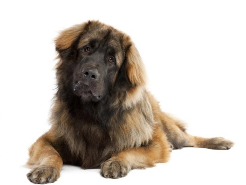 Dieta psa po operacji ropomacicza
