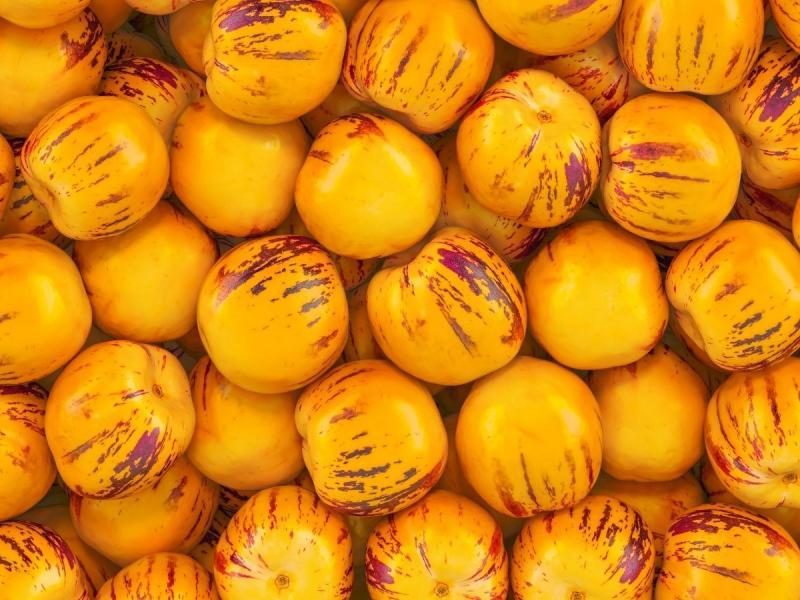 warzywa psiankowe pepino
