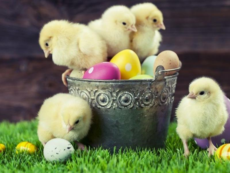 Wierszyki Na Wielkanoc Z Barankiem Zajączkiem I
