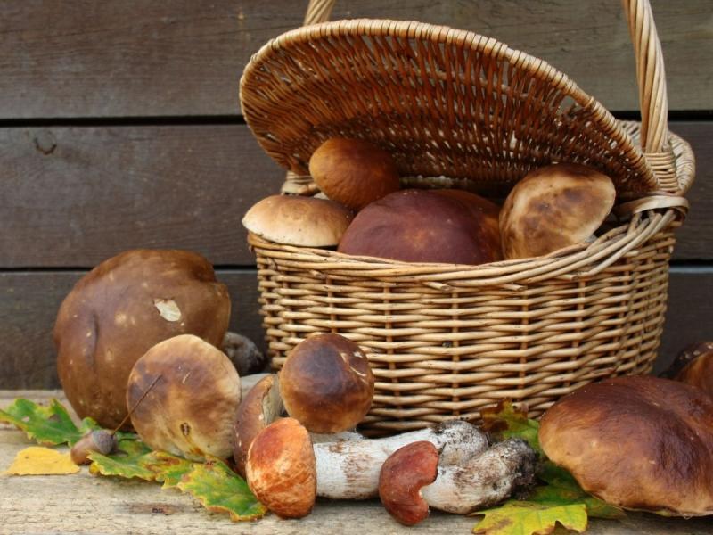 właściwości odżywcze grzybów