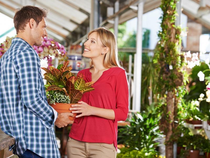 Domowe Kwiaty Doniczkowe Cieniolubne Pnące Kwitnące Zielone