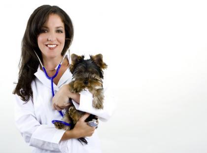 10 mitów na temat sterylizacji i kastracji psów