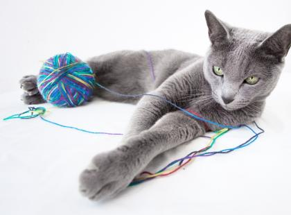 10 najczęstszych problemów z kotem