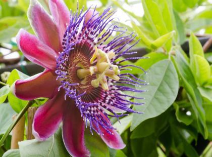 10 niesamowitych, egzotycznych kwiatów doniczkowych. Nie są wcale kapryśne! Sprawdź jak o nie dbać!