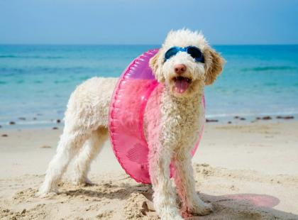 10 zasad podróżowania z psem