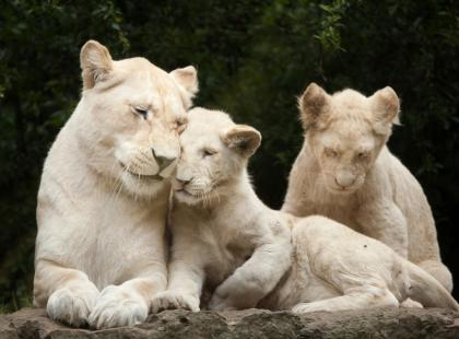 13 faktów o albinizmie, o których nie miałaś bladego pojęcia