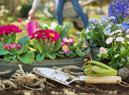 Jakie Kwiaty Posadzic W Ogrodzie 14 Najpopularniejszych Gatunkow