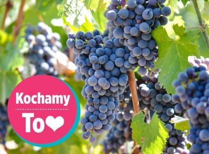 20 pomysłów na to, co zrobić z winogron
