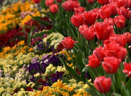 20 pytań do ogrodnika