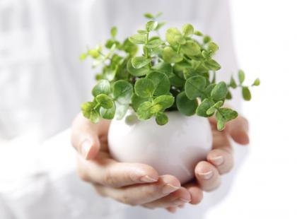 3 metody czyszczenia kwiatów doniczkowych