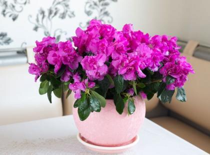 4 domowe sposoby na problemy z roślinami
