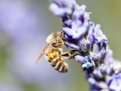4 mity o ukąszeniach owadów i zwierząt. Też w to wierzysz?