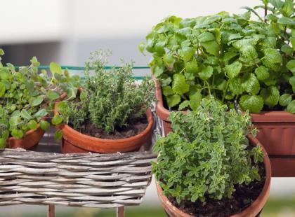 4 pomysły na ziołowe aranżacje