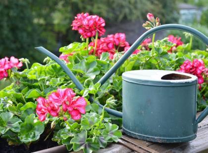 4 propozycje - jakie wybrać kwiatki na balkon?