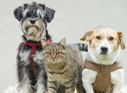 4 przydatne pomysły dla posiadaczy zwierzaków