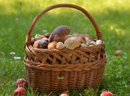 4 rady, jak bezpiecznie zbierać grzyby