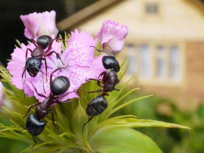 4 sposoby na mrówki w ogrodzie