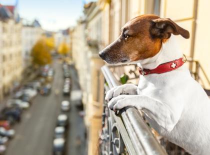 4 typy psów mieszkających w miastach