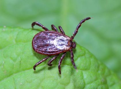 5 domowych sposobów na odstraszenie owadów