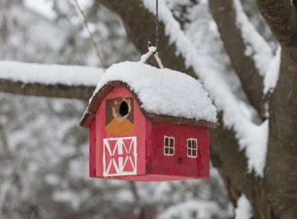 5 kroków, jak zrobić karmnik dla ptaków