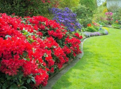 5 krzewów ozdobnych, które wzbudzą twój zachwyt