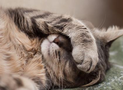 5 najczęstszych pytań o opiekę nad kotem