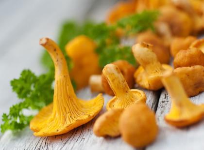 5 najlepszych przepisów na dania z grzybami