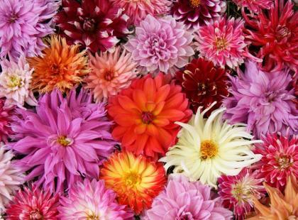 5 najpiękniejszych jesiennych kwiatów