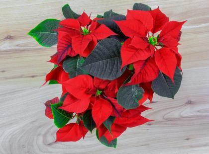 5 najpiękniejszych roślin o kolorowych liściach