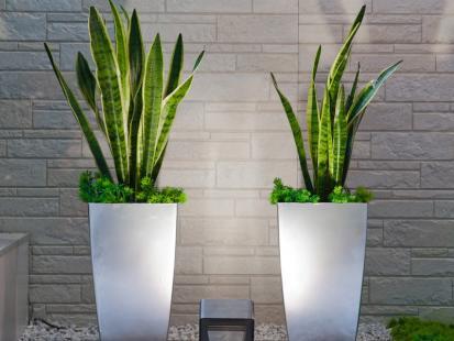 5 najzdrowszych roślin do domu