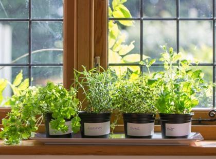 5 pomysłów na zioła na parapecie