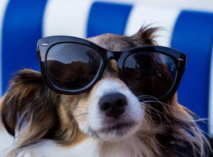 5 porad, jak dbać o psa w upalne dni
