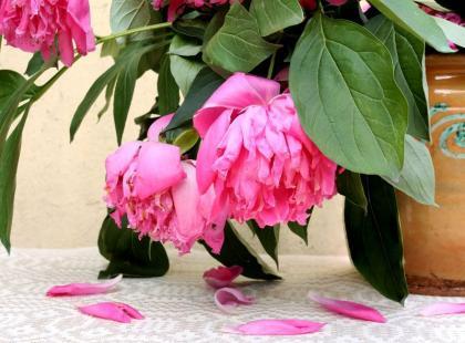 5 powodów, przez które twoje rośliny doniczkowe marnieją