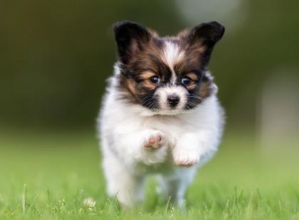 5 pytań o psią naturę