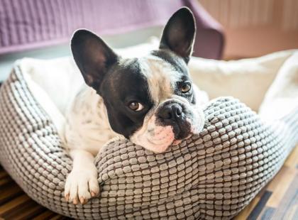 5 rad, jak sprzątać po zwierzakach