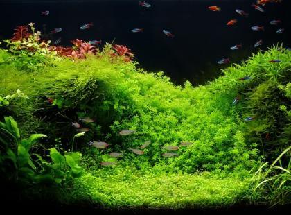 5 roślin akwariowych, z którymi poradzi sobie początkujący akwarysta