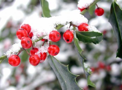 5 roślin, które ozdobią twój ogród zimą - posadź je!