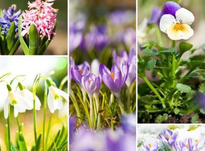 5 wiosennych kwiatów w domu